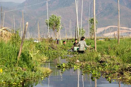tierra fertil: Mujeres birmanas van en barco tradicional entre los jardines flotantes en el lago Inle, Estado de Shan, Myanmar. Tradicional m�todo de la agricultura wich utiliza una peque�a �reas rectangulares de tierra f�rtil para cultivar en el lecho de un lago poco profundo