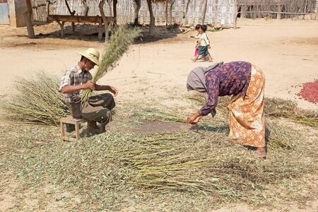 min: Burmese farmers are working the crops in Min Nam Thu village, Bagan, Myanmar Editorial