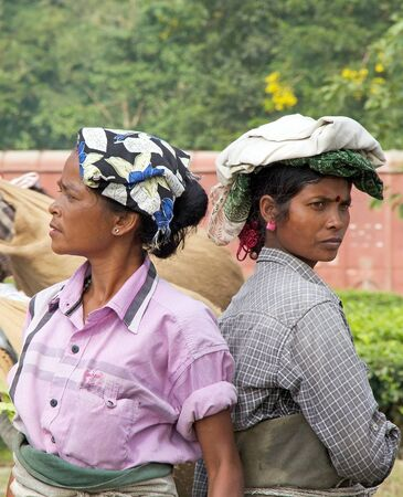 cash crop: Tea harvesters portrait in the tea plantation in West Bengal, India. Agriculture accounts for the largest share of labour force in West Bengal and it is very important for the States gross domestic product. Tea is an inportant cash crop