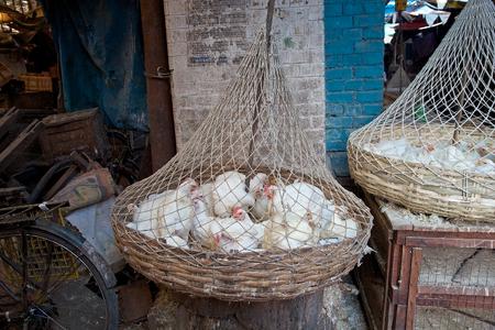kolkata: Chikens for sale along the street in Kolkata, India