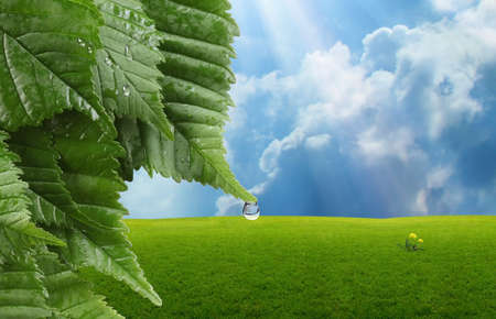 Leaves with a drop of water and grassland with sunlight