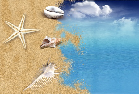 Beach with shells and sea with sky with clouds