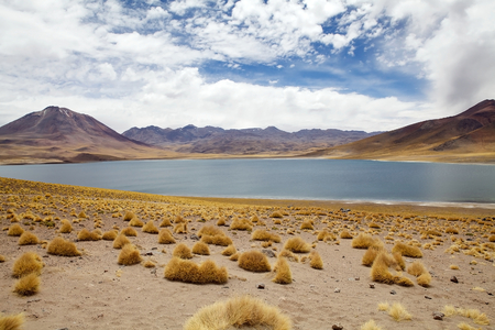 brackish water: Miscanti Lagoon are a brackish water lakes located 4000 metres above the sea level in the Antofagasta Region in northern Chile, about 100 Km from San Pedro de Atacama.