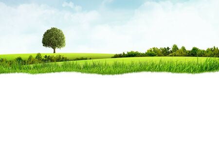 Illustration of green landscape with grassland and tree and white background