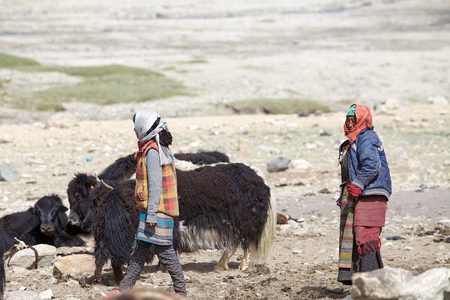 Nomads and yaks among the mountains In Ladakh region in the Indian state of Jammu and Kashmir. The mountain lake is at an altitude of 4522 m in the Changthang Plateau