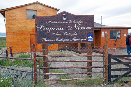 Laguna Nimez, a wildlife reserve at El Calafate in Patagonia, Argentina. The reserve is a few steps from the city center and close to Lake Argentino. The Laguna Nimez concentrates a varied sample of local wildlife. Editorial