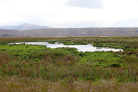 Laguna Nimez, a wildlife reserve at El Calafate in Patagonia, Argentina. The reserve is a few steps from the city center and close to Lake Argentino. The Laguna Nimez concentrates a varied sample of local wildlife. Banco de Imagens - 98982893
