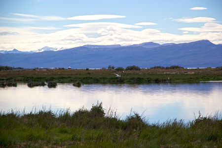 Laguna Nimez, a wildlife reserve at El Calafate in Patagonia, Argentina. The reserve is a few steps from the city center and close to Lake Argentino. The Laguna Nimez concentrates a varied sample of local wildlife. Banco de Imagens - 98974277