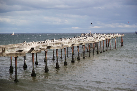 Cormorants in Punta Arenas, Chile. Punta Arenas is the capital city of the Magallanes and Antartica Chilena