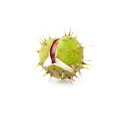 Chestnut isolated on white