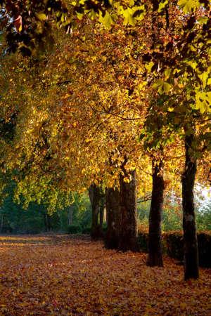 Los árboles en un parque con los colores del otoño. Foto de archivo - 14408370