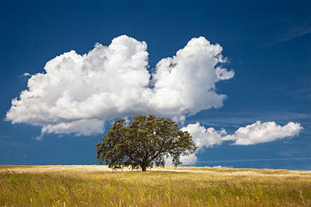 Lonely tree on farm field with cloudy sky. photo