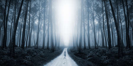 Scary Misty Road in the Forest photo