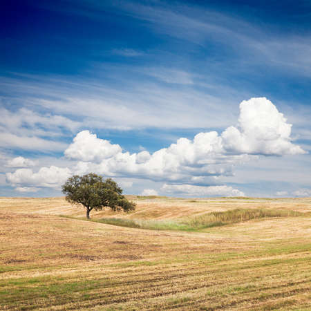Lonely tree on farm field with beautiful sky
