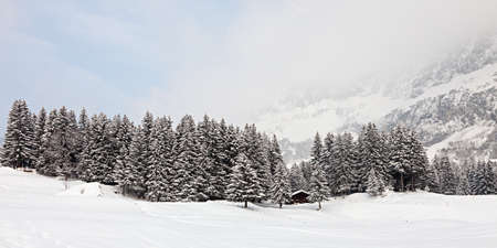 Panoramic photo of a forest in the mountains covered with snow on a snowstorm  Swiss Alps  Stock Photo