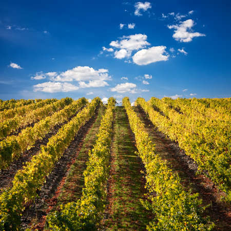 blue sky and fields: Landscape Photo : Beautiful view over the Port Wine vineyards in Douro, Portugal on Fall  Autumn.
