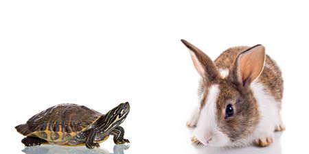 흰색 배경에 고립 된 귀여운 토끼와 거북이. 개념 : 공모전