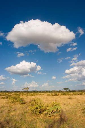 Savannah landscape in Samburu Reserve, Kenya