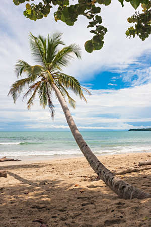 Palm tree on a beach in the caribbean. Puerto Viejo, Costa Rica.