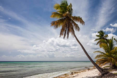 Palm tree on a beach in the caribbean. Sahona Island, Dominican Republic.