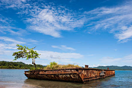 viejo: An old rusty vessel with a tree on a beach. Puerto Viejo, Costa Rica.