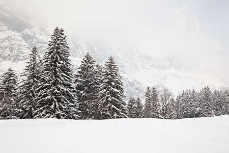 panorama view: Trees in the snow on a foggy day in the Swiss Alps.