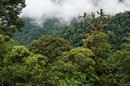Wonderful view over Costa Rican rain forest. La Fortuna.