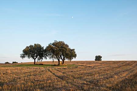 Trees on farm field. Alentejo, Portugal