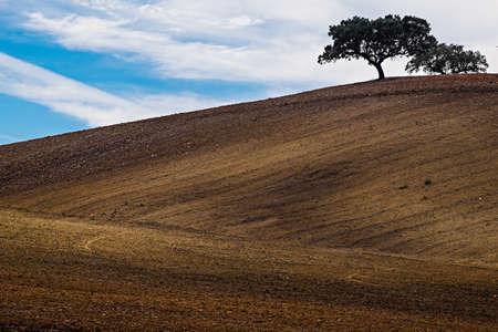 Lonely tree on farm field. Alentejo, Portugal