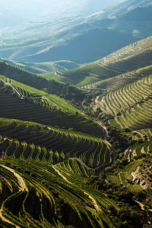 Beautiful view over the Port Wine vineyards in the Douro Region, by the river in Portugal