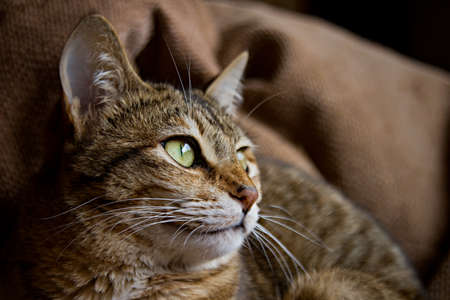 Beautiful striped brown cat. Shallow depth of field. Stock Photo