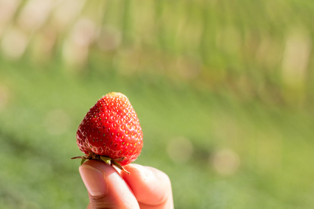grab a fresh strawberry in daylight Stockfoto