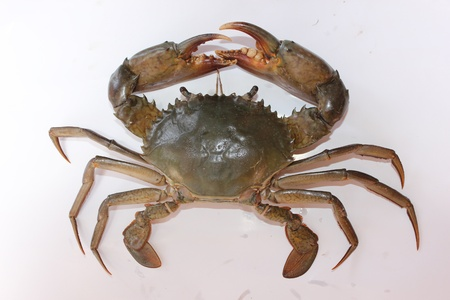 Crabs are usually sold in the market
