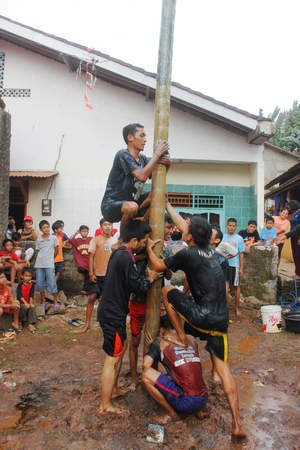 areca: Areca tree-climbing race to commemorate Indonesian independence day, August 17, 2014
