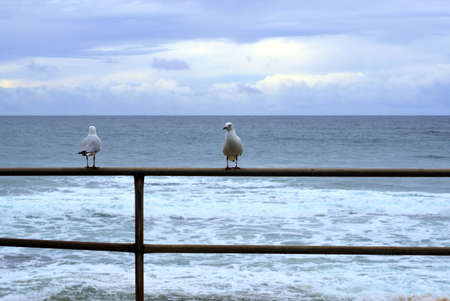 Seascape of pair of sea gulls perched on iron railing with ocean, sea waves, grey cloudy sky and horizon in the background