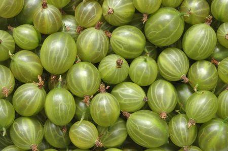 grosella: Gooseberry macro