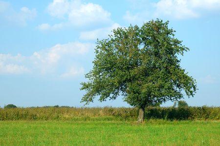 Meadow, blue sky and tree Stock Photo - 373554