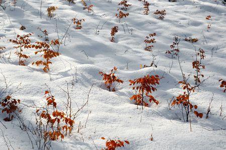 winter scenery: Winter scenery Stock Photo