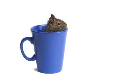 Macro of a mug with degu inside isolated on white Stock Photo - 13966460