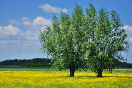 Two trees and yellow flowers against blue sky Stock Photo - 13966455