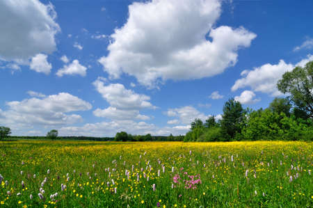 Spring landscape - meadow full of flowers and blue sky Stock Photo - 14410680