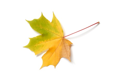Macro of autumn leaf on white background Stock Photo - 14410655