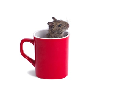Macro of a mug with degu inside isolated on white Stock Photo - 15527955