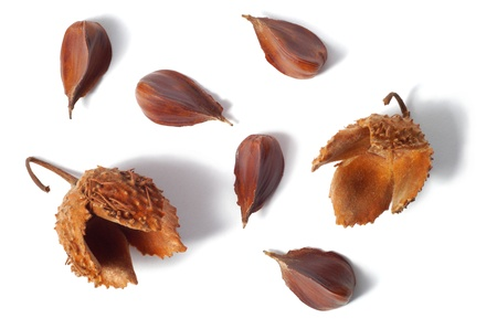 Nuts of common beach tree isolated on white background Stock Photo - 17191025