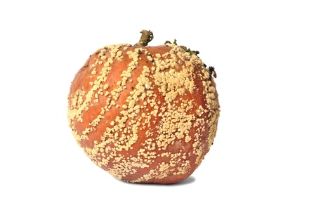 Macro of rotten apple isolated on white background Stock Photo - 19423710