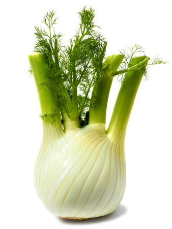 Verse groene venkel lamp op witte achtergrond Stockfoto