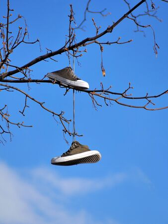 sport shoes: Old sport shoes hanging on a tree against blue sky Stock Photo