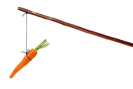 Palo con la zanahoria en cadena aislado en blanco