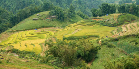 Rice field in Sapa Reklamní fotografie