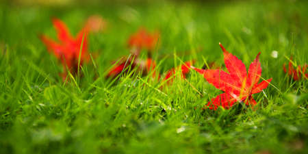 red leaves in grass Imagens